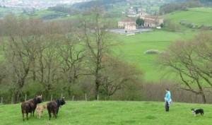 Basabe Baserria Venta Directa De Carne con Eusko Label - Vacas